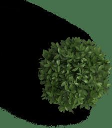 Plant 5-1